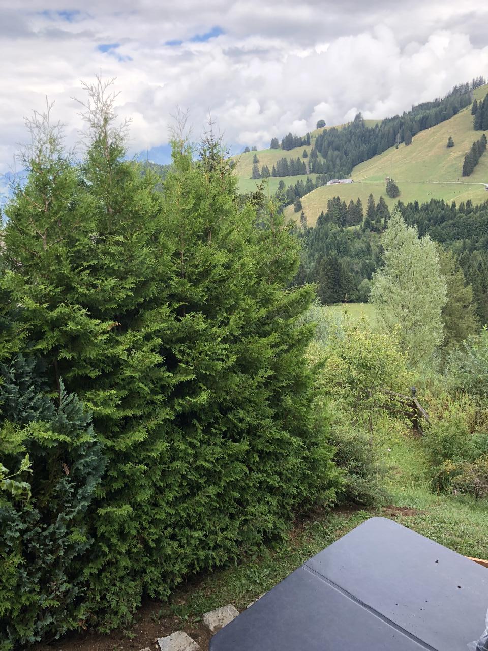 Ferienhaus Chalet Edelweiss (2470486), Moléson-sur-Gruyères, , Freiburg, Schweiz, Bild 23