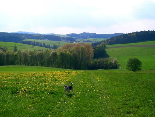 Ferienwohnung bis 6 Pers. (251245), Zandt, Bayerischer Wald, Bayern, Deutschland, Bild 18