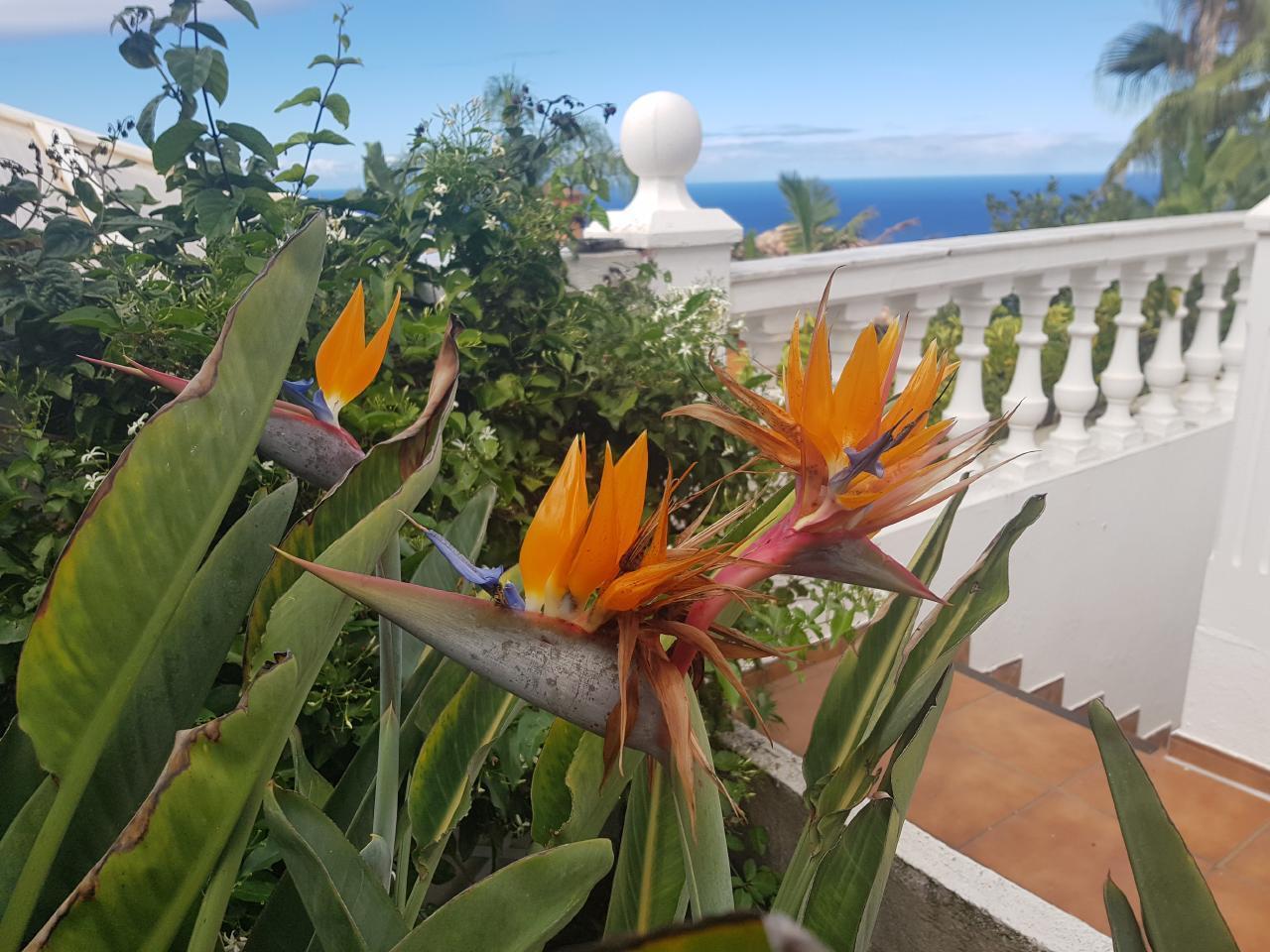 Appartement de vacances Villa Larnia Familien Apartment   * Urlaub für Körper, Geist und Seele * (2529406), El Sauzal, Ténérife, Iles Canaries, Espagne, image 19