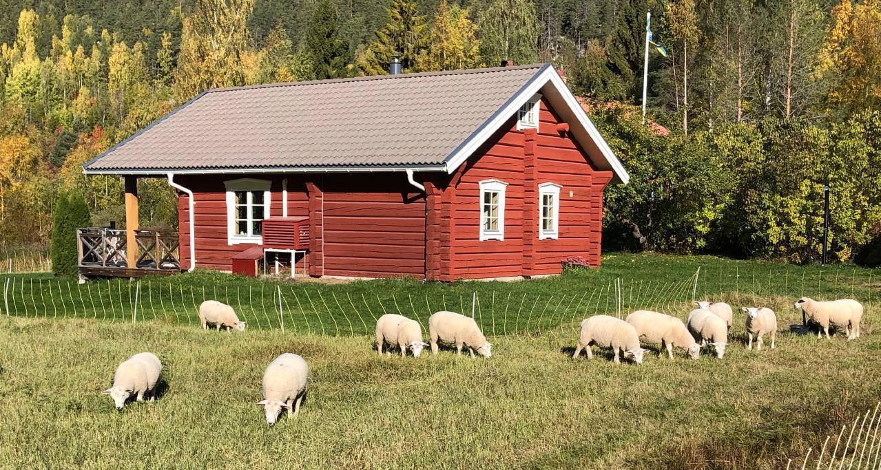 Ferienhaus am Växsjö in Sjörgrå (2545239), Bollnäs, Gävleborgs län, Nordschweden, Schweden, Bild 12