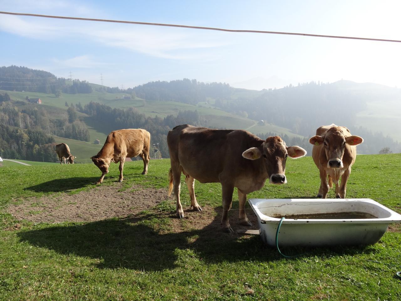 Ferienwohnung Alpsteinblick (2545980), Appenzell, Appenzellerland, Ostschweiz, Schweiz, Bild 16