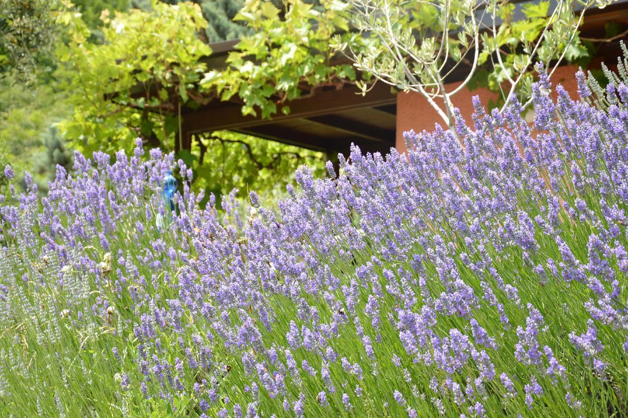 Ferienhaus Bungalow über dem Gardasee mit malerischem Garten,See- und Bergblick (2575328), Gardola, Gardasee, Lombardei, Italien, Bild 23