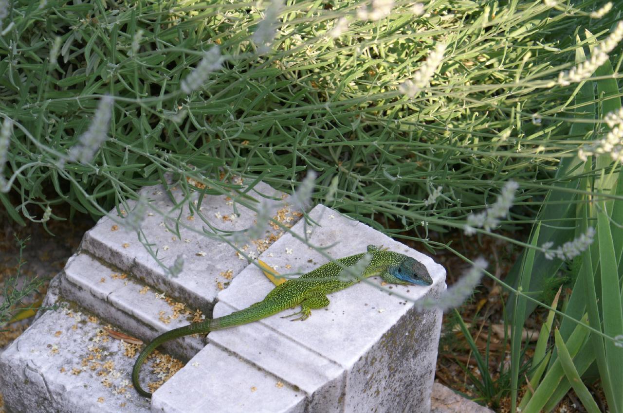 Ferienhaus Bungalow über dem Gardasee mit malerischem Garten,See- und Bergblick (2575328), Gardola, Gardasee, Lombardei, Italien, Bild 25