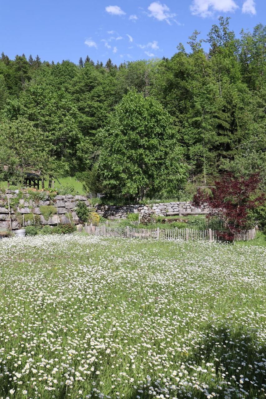 Ferienwohnung Leuweli (2691569), Hasliberg Hohfluh, Meiringen - Hasliberg, Berner Oberland, Schweiz, Bild 7