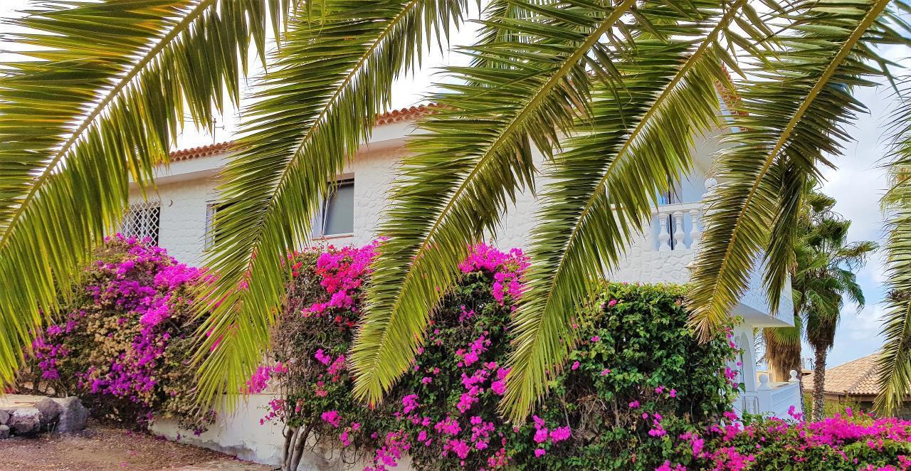 Appartement de vacances Fusion Family-Panorama Apartments für 6 Personen (2691599), El Sauzal, Ténérife, Iles Canaries, Espagne, image 23