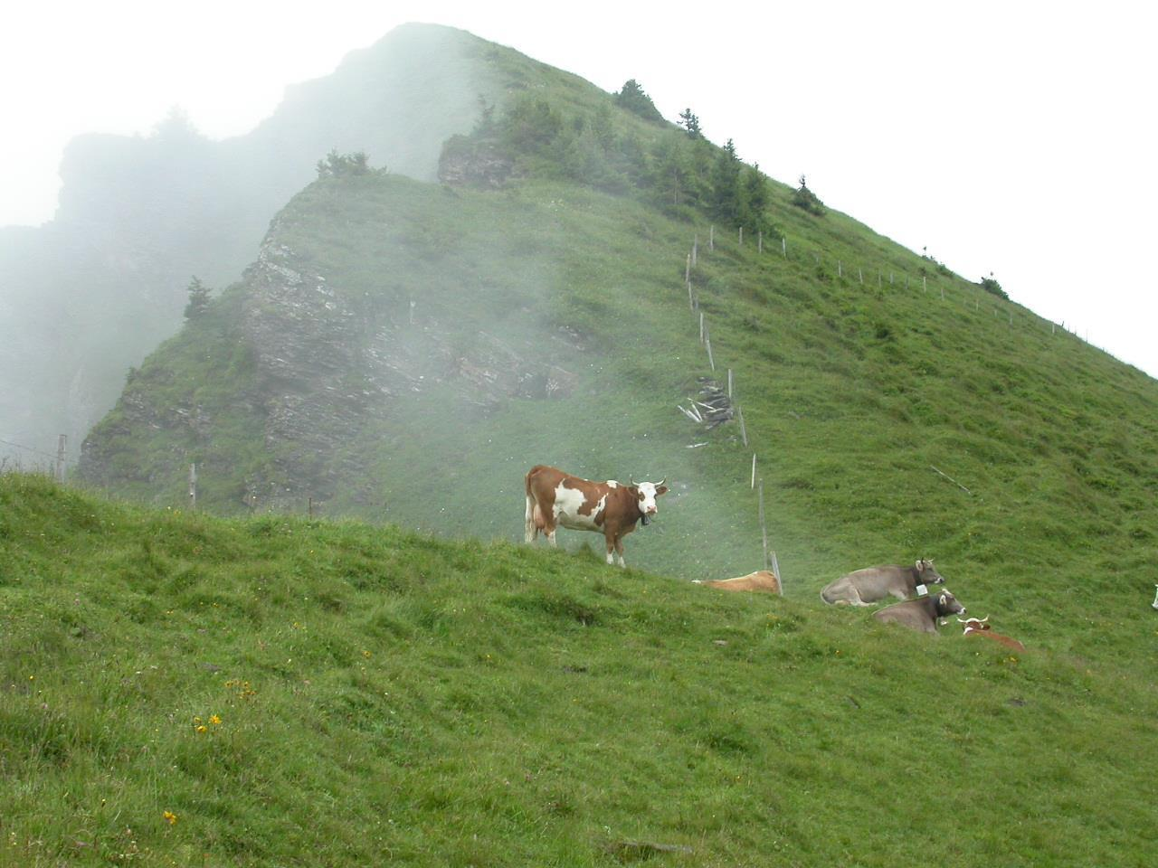 Ferienwohnung Darioli 5-Bettwohnung (2692273), Innertkirchen, Meiringen - Hasliberg, Berner Oberland, Schweiz, Bild 24