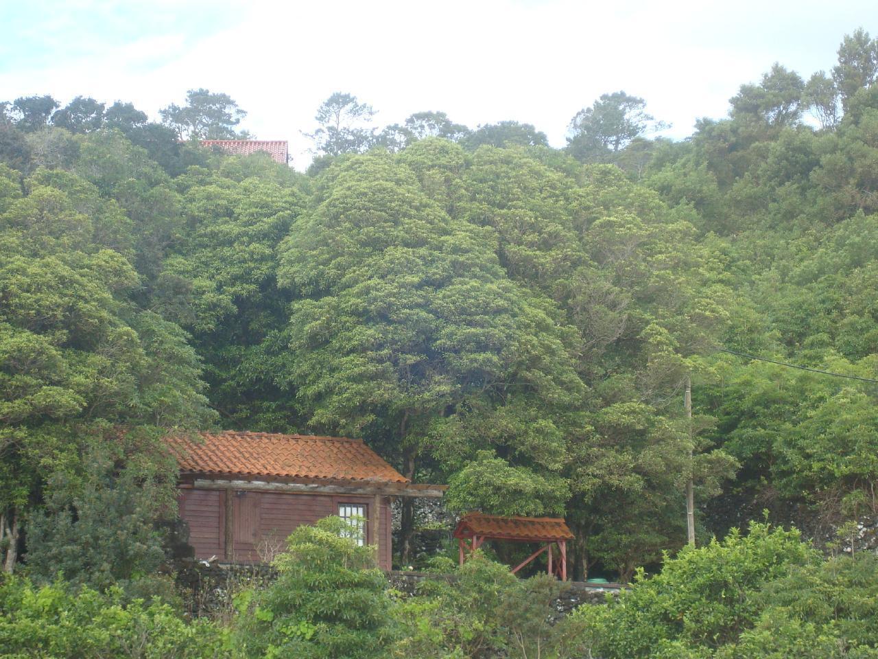 Ferienhaus A Cabana (2702177), Prainha, Pico, Azoren, Portugal, Bild 8
