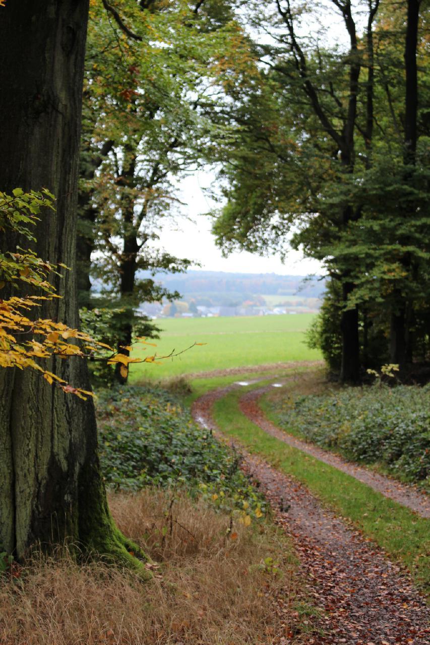 Ferienwohnung Ferienwohnung (276493), Spesenroth, Hunsrück, Rheinland-Pfalz, Deutschland, Bild 43