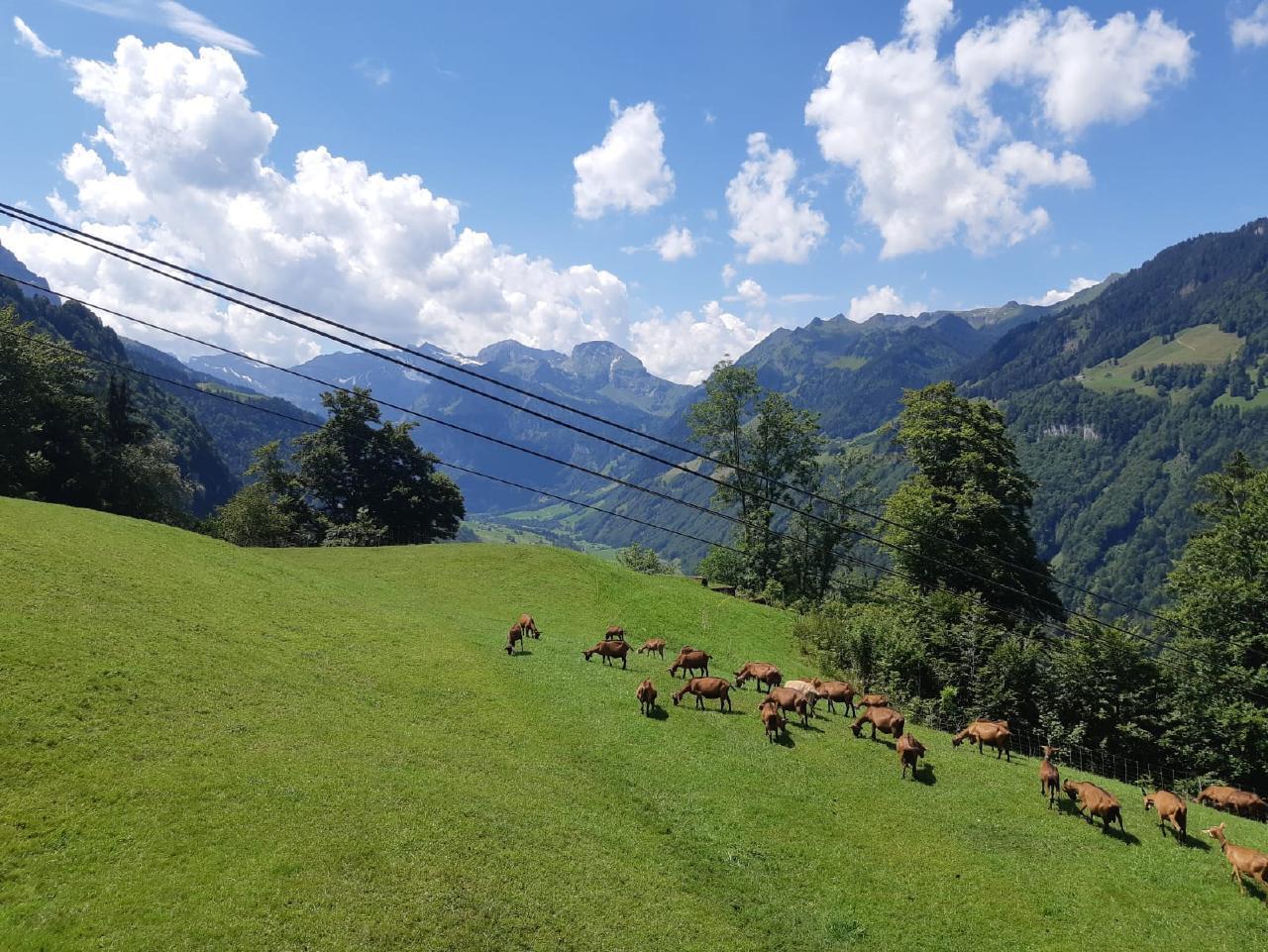 Ferienwohnung Oase im Engelbergertal zwischen Luzern & Engelberg (2792198), Wolfenschiessen, Nidwalden, Zentralschweiz, Schweiz, Bild 11