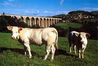 Ferienhaus Grand Biolay (303450), Romenay, Saône-et-Loire, Burgund, Frankreich, Bild 11