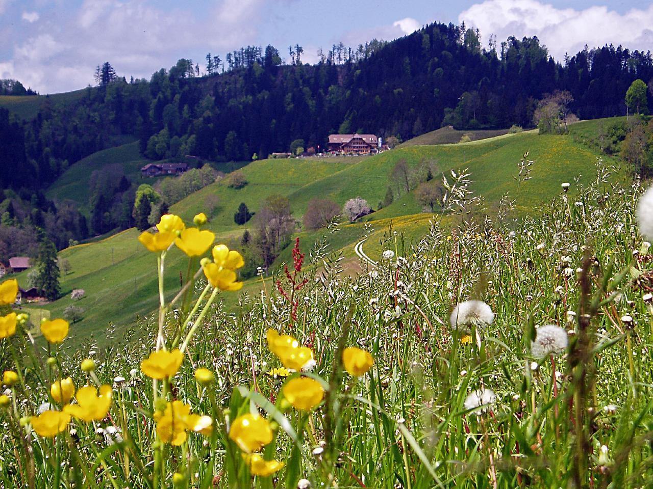 Ferienwohnung Napf-Chäsi (332635), Luthern, Willisau, Zentralschweiz, Schweiz, Bild 14
