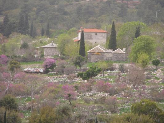 Holiday house Gästehaus von Walter und Marie (335995), Theologos, Thassos, Aegean Islands, Greece, picture 9