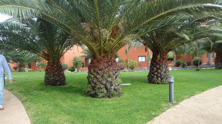 Ferienwohnung Apartments TA Corralejo (339956), Corralejo, Fuerteventura, Kanarische Inseln, Spanien, Bild 9