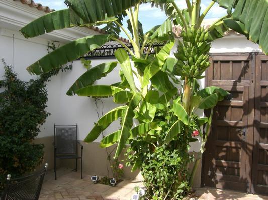 Maison de vacances Golfvilla/Nebenhaus mit Pool in Andalusien (34533), El Rompido, Costa de la Luz, Andalousie, Espagne, image 17