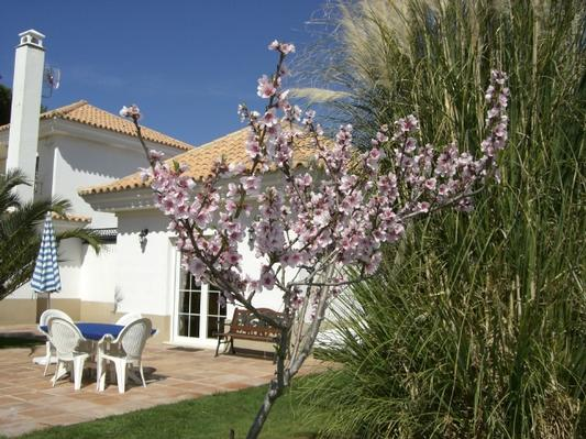 Maison de vacances Golfvilla/Nebenhaus mit Pool in Andalusien (34533), El Rompido, Costa de la Luz, Andalousie, Espagne, image 13
