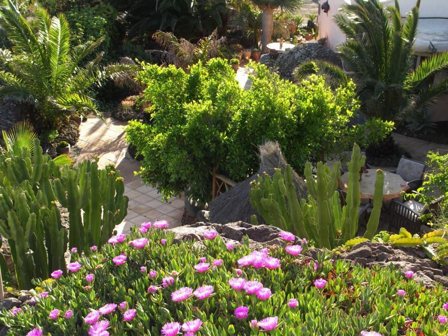 Holiday house Finca Casa Niro (345269), La Asomada, Lanzarote, Canary Islands, Spain, picture 11