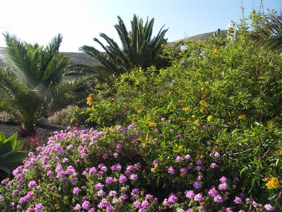 Holiday apartment Finca Casa Roco II (345271), La Asomada, Lanzarote, Canary Islands, Spain, picture 15