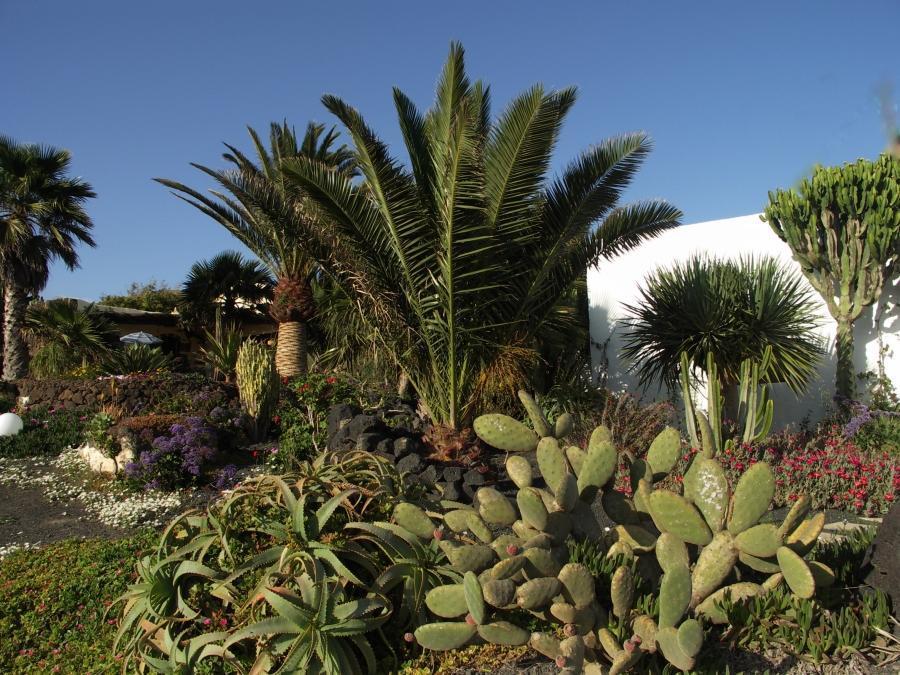 Holiday apartment Finca Casa Roco II (345271), La Asomada, Lanzarote, Canary Islands, Spain, picture 22