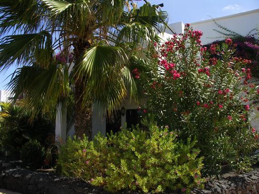 Holiday apartment Tropican (357310), Puerto del Carmen, Lanzarote, Canary Islands, Spain, picture 19