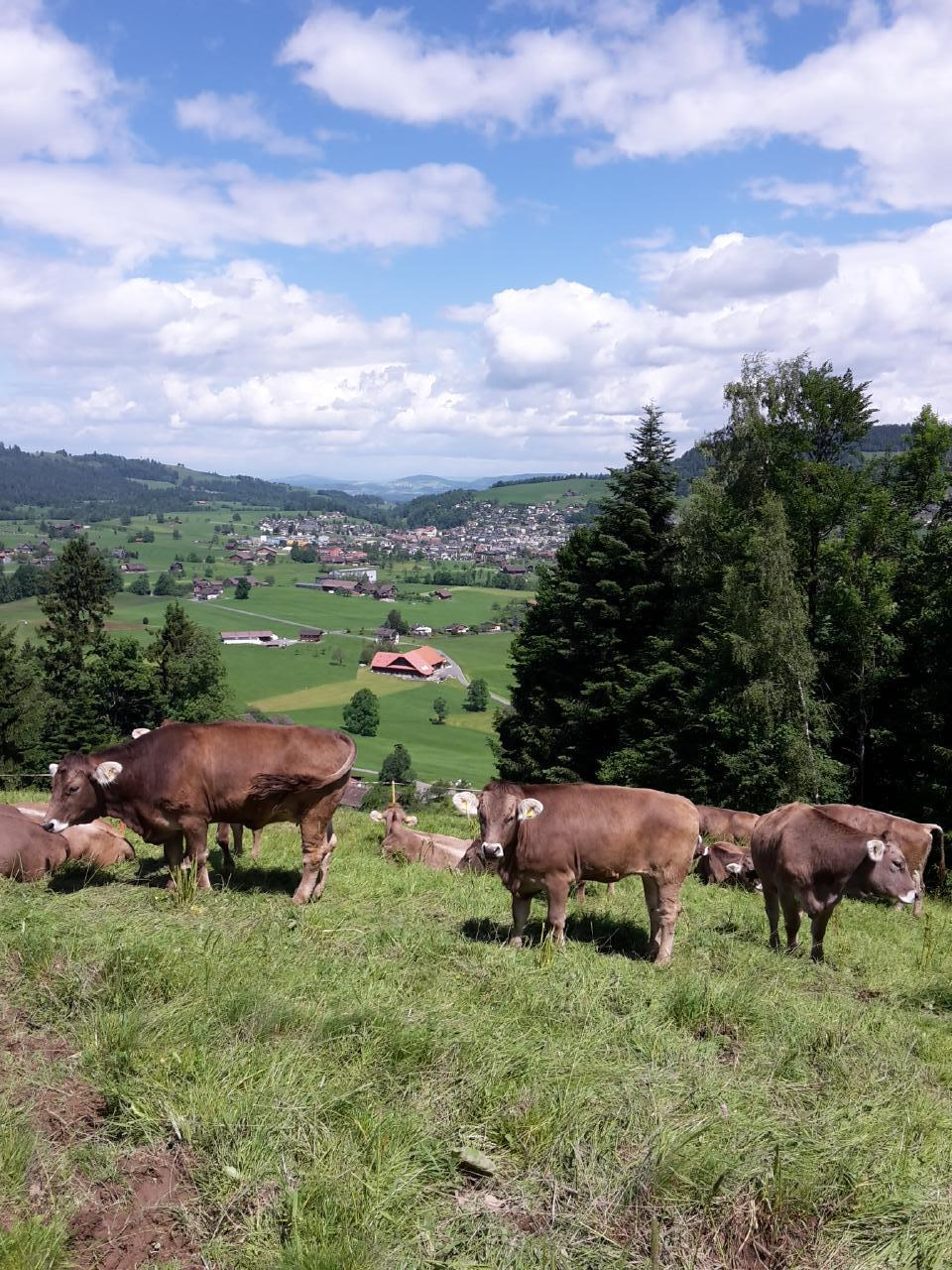 Holiday apartment Fruehalp (362383), Unterägeri, Lake Zug - Aegeri Valley, Central Switzerland, Switzerland, picture 14