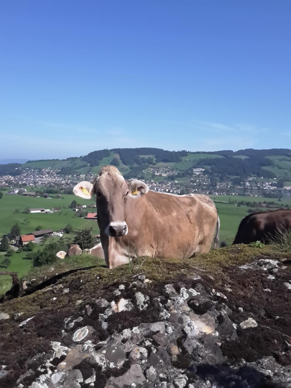 Holiday apartment Fruehalp (362383), Unterägeri, Lake Zug - Aegeri Valley, Central Switzerland, Switzerland, picture 4