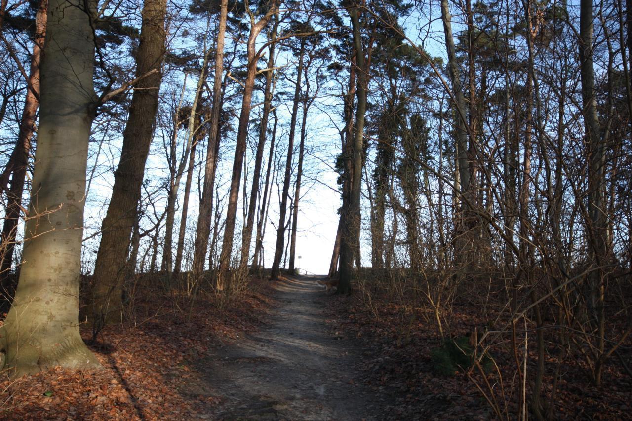 Ferienwohnung Black Pearl *** nur 400m zum Ostseesandstrand*** (381382), Koserow, Usedom, Mecklenburg-Vorpommern, Deutschland, Bild 22