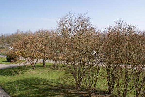 Ferienwohnung Ostsee Appartement, strandnah und ruhig gelegen (426744), Schönberg (Kieler Förde), Kieler Förde, Schleswig-Holstein, Deutschland, Bild 12