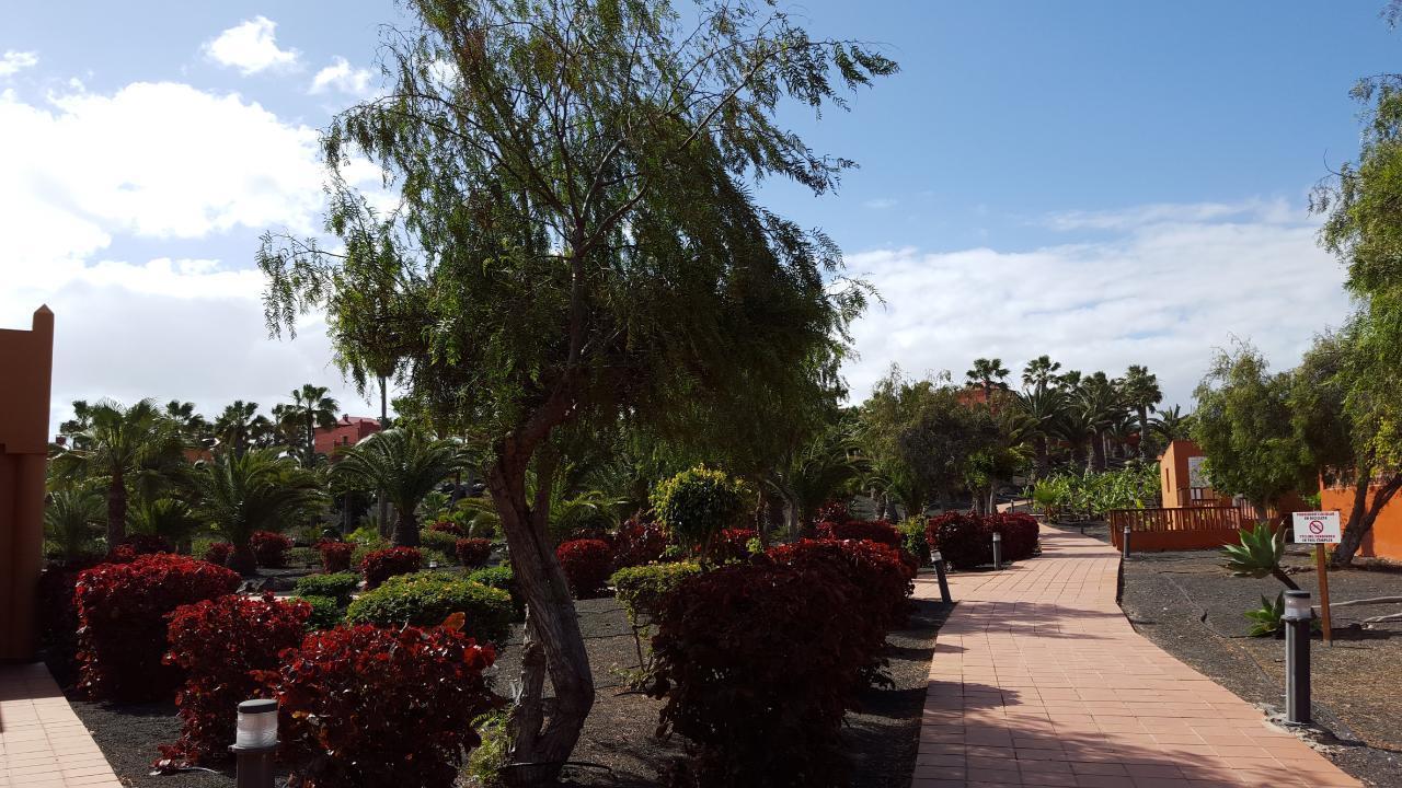 Ferienwohnung Apartments RO2 Corralejo (I) (428506), Corralejo, Fuerteventura, Kanarische Inseln, Spanien, Bild 9