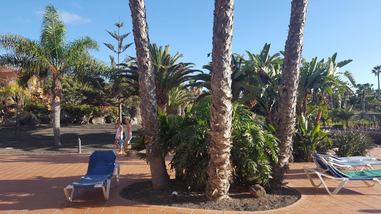 Ferienwohnung Apartments RO2 Corralejo (I) (428506), Corralejo, Fuerteventura, Kanarische Inseln, Spanien, Bild 11