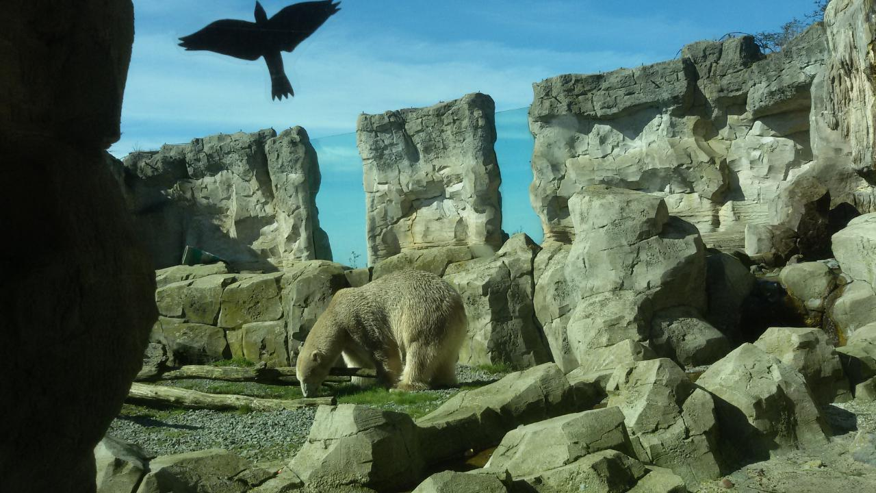 Zoo am Meer in Bremerhaven