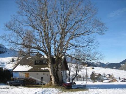 Ferienhaus Am Schwendisee (445995), Wildhaus, Toggenburg, Ostschweiz, Schweiz, Bild 5