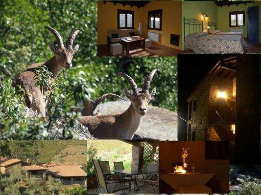 Ferienwohnung Ramajalrural 1 (456674), Horcajo, Caceres, Extremadura, Spanien, Bild 11