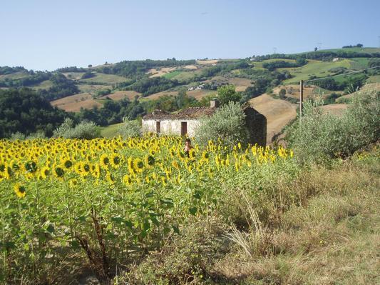 Ferienhaus Guesthouse Casa da Carmine (456945), Castiglione Messer Raimondo, Teramo, Abruzzen, Italien, Bild 7
