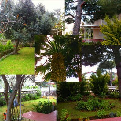 Ferienhaus Erni 1 (464478), Dikili, , Ägäisregion, Türkei, Bild 5