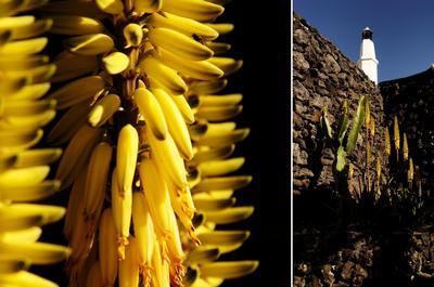 Ferienwohnung Casa Rural Finca Creativa - Casita Aloe (468365), Uga, Lanzarote, Kanarische Inseln, Spanien, Bild 15