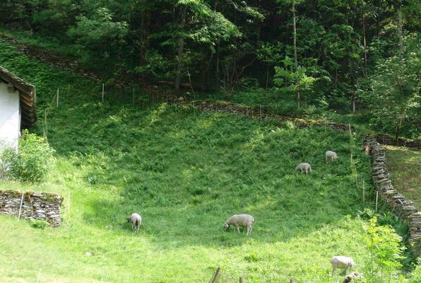 Ferienwohnung Ferienwohnung (478576), Promontogno, Bergell, Graubünden, Schweiz, Bild 15