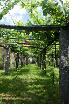Ferienwohnung 3 1/2-Zimmerwohnung in Giornico (494812), Giornico, Leventina, Tessin, Schweiz, Bild 8