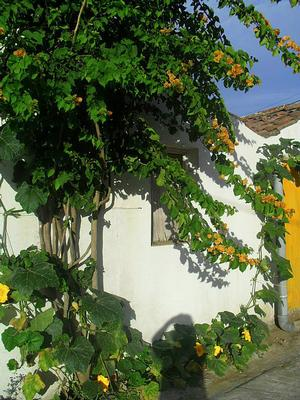 Ferienhaus Casa Girassol (495447), Ginetes, Sao Miguel, Azoren, Portugal, Bild 22