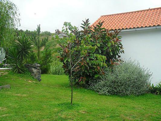 Ferienhaus Casa Girassol (495447), Ginetes, Sao Miguel, Azoren, Portugal, Bild 4