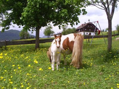 Appartement de vacances Gsenger (497883), Abtenau, Tennengau, Salzbourg, Autriche, image 14
