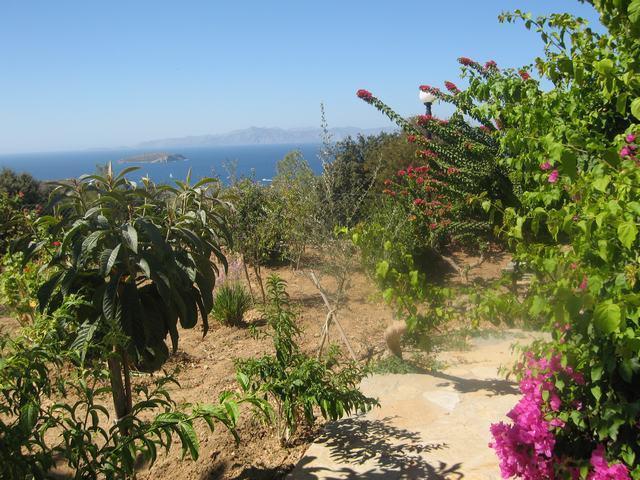 Ferienhaus VILLA DELPHIN - BODRUM GÜMÜSLÜK - Mit Märchenhaftem Natur und Meerblick (502386), Koyunbaba, , Ägäisregion, Türkei, Bild 20