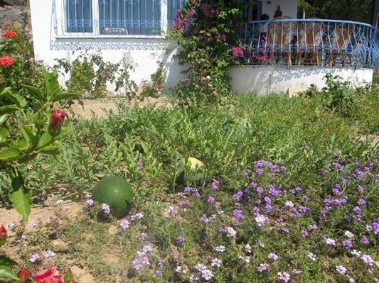 Ferienhaus VILLA DELPHIN - BODRUM GÜMÜSLÜK - Mit Märchenhaftem Natur und Meerblick (502386), Koyunbaba, , Ägäisregion, Türkei, Bild 13
