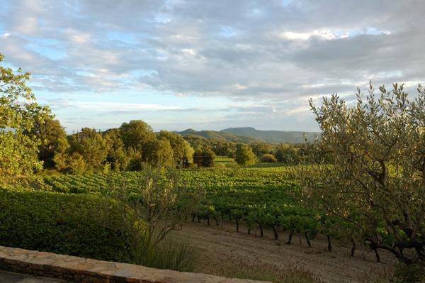 Aussicht von Liegenschaft über Weinanbau auf die Bergkette