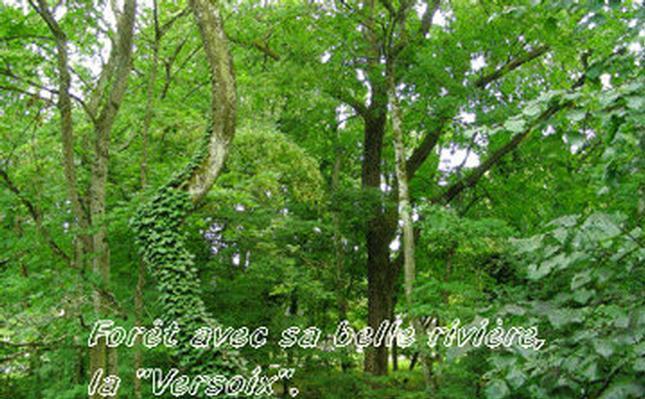 Maison de vacances chalet-magnolia (602207), Versoix, Genève, Vaud, Suisse, image 18