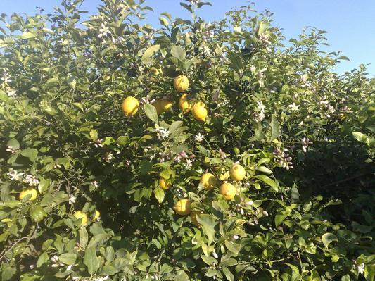 Ferienwohnung Wohnen im Zitronenhain (699478), Los Montesinos, Costa Blanca, Valencia, Spanien, Bild 9
