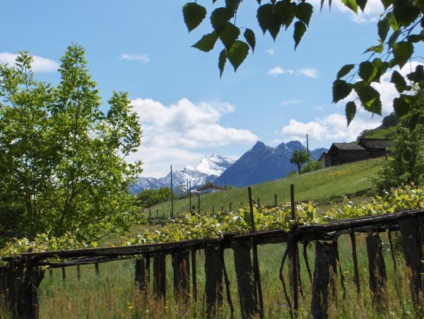 Maison de vacances Casa Giardino Grande (772133), Semione, Vallée de Blenio, Tessin, Suisse, image 24