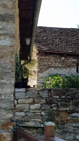 Maison de vacances Casa Giardino Grande (772133), Semione, Vallée de Blenio, Tessin, Suisse, image 36