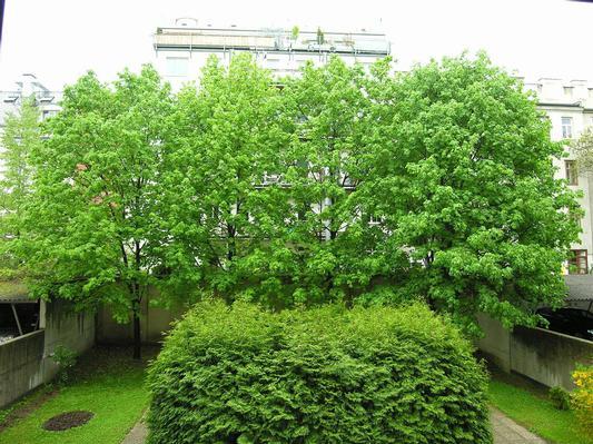 Appartement de vacances Apartment Alt-Wien 14 in Wien-Penzing, Österreich (830520), Vienne, , Vienne, Autriche, image 14