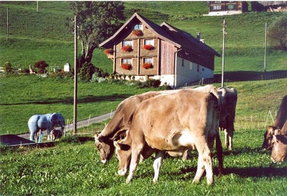 Appartement de vacances Bellahof (862366), Flumserberg Bergheim, Pays d'Heidi, Suisse Orientale, Suisse, image 9