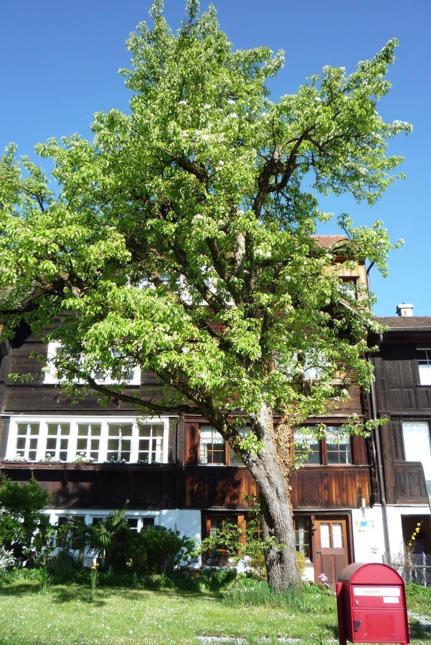 Ferienwohnung Tobelmüli (862374), Thal (CH), St. Gallen, Ostschweiz, Schweiz, Bild 3